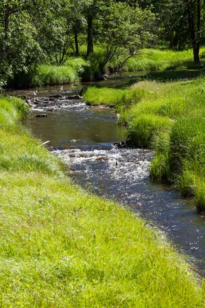 A creek flowing from the forest of the Black Hills into a field of tall green grass and sunshine.
