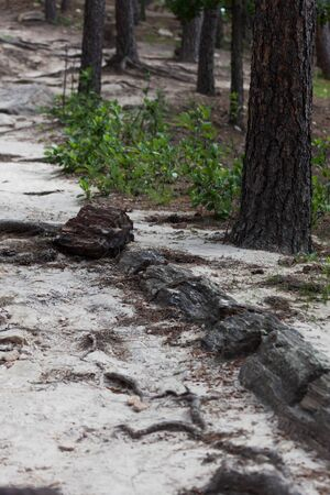 A tree that has been petrified and  is millions of years old has been exposed once again as it lays next to a dirt trail in South Dakota.