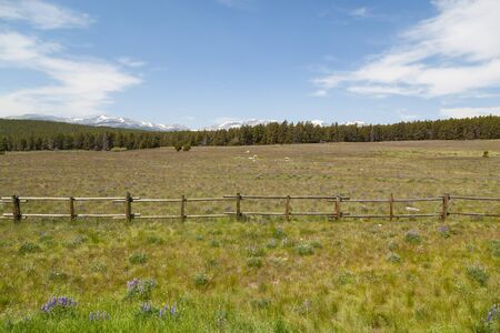 Looking across a green field dotted with wildflowers and past a wooden fence to a thick forest and the distant Bighorn National Forest with a blue sky in Wyoming.