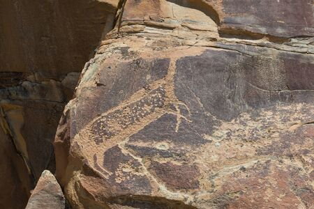A large deer missing its head carved into ancient sandstone rock that is cracking and eroding over time at Legend Rocks State Petroglyph Site, Wyoming.