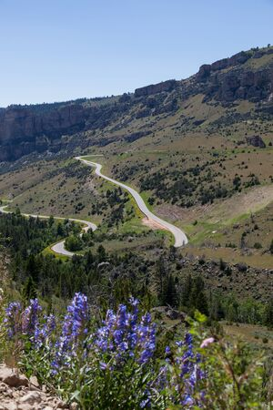 Route 16 zig zags as it makes it way down the steep grade of Ten Sleeps Canyon embankment in Wyoming with lupine wildflowers and blue sky.