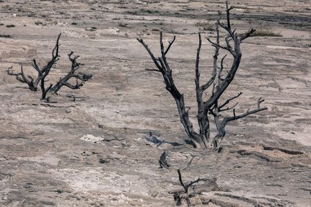 An antique effect photo of a skeleton of a dead tree covered over by a hot water mineral flow formation which has also died with out its water source in Yellowstone National Park.