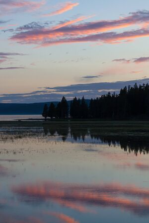 The setting sun makes small clouds glow pink and purple in the sky and also in their reflection upon Yellowstone Lake with a line of trees in the middle. Stok Fotoğraf