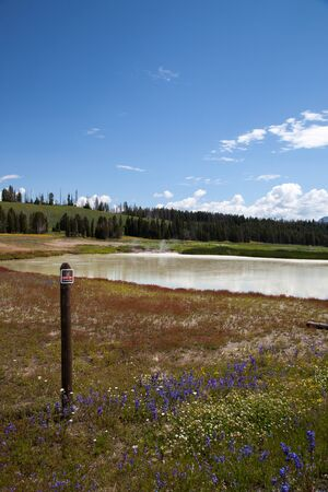 Steam rising from Beach Springs with purple and yellow wildflowers and several dead trees from past wildfires in the distance at Yellowstone National Park, Wyoming. Stok Fotoğraf