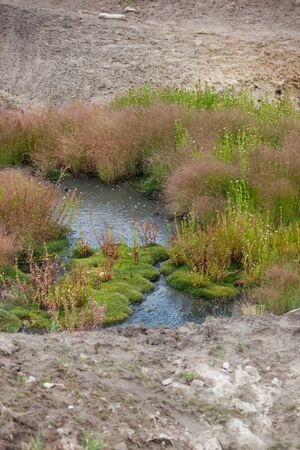 A small pond of geothermal water with gas bubbles floating to the surface and moss and other greenery growing in island clusters near the warm water.