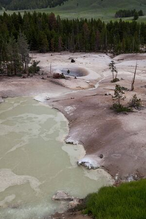 Sulphur Caldron at Yellowstone National Park with bubbling, sulphur smelling water in a barren landscape, a distant resting bison and evergreen trees in the distance.
