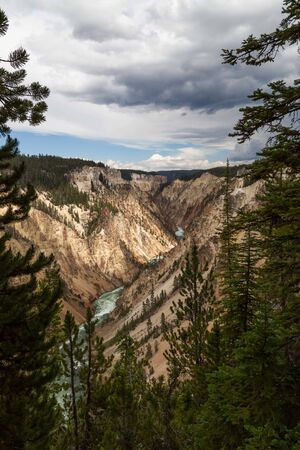 The wild and fast green water Yellowstone River flowing through the colorful steep rocky walls of the Grand Canyon of the Yellowstone and framed by evergreen trees in Yellowstone National Park, Wyoming with distant storm clouds.