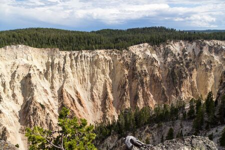 Steep rock walls that have been eroded over time and topped with evergreen trees at the Grand Canyon of the Yellowstone in Yellowstone National Park, Wyoming.