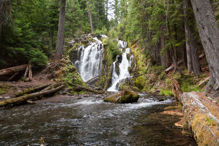 The beautiful and wild water of National Creek Falls as it rushes over a rocky cliff in the pristine forest of the Southern Oregon Cascades.