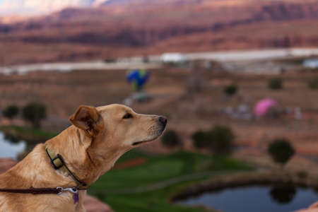 A curious dog looks and sniffs the air at the annual Lake Powell Balloon Regatta from the sandstone cliffs of Page, Arizona.