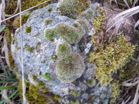 mossy: Mossy rock