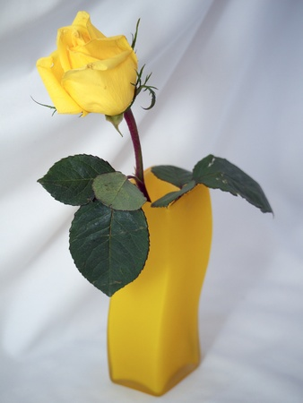 Yellow rose in a yellow vase on a light background photo