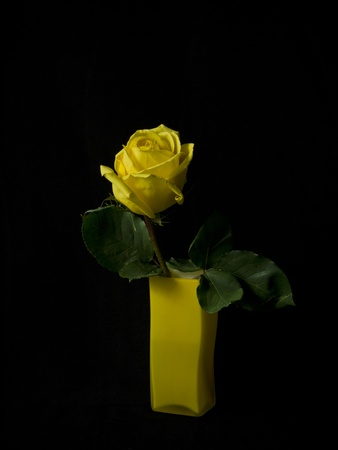 Yellow rose in a glass yellow vase on a black background