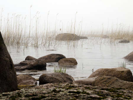 Fog and coastal rocks by the pond in the woods