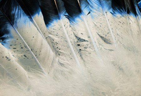 headress: Native American Indian Style Feathers in Blue and White Stock Photo