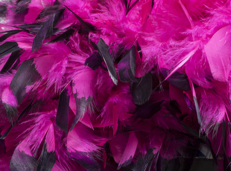 gaudy: Hot Pink Feathers Detail
