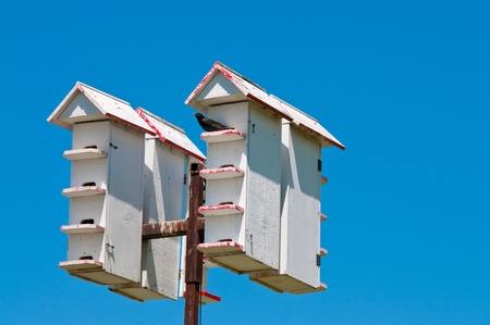 upclose: Up-close view of multiple bird houses in the sky