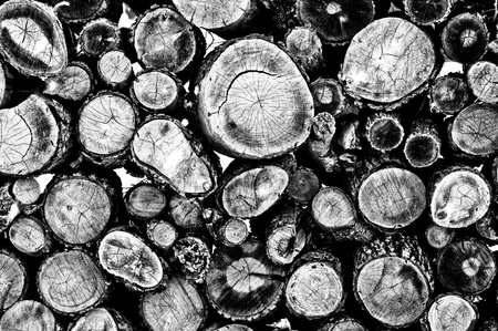 Firewood up-close black and white as a background. photo
