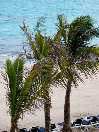 three palm trees: Beautiful tropical view of three palm trees on the beach near the ocean.