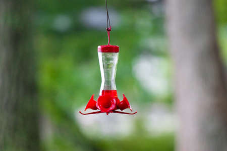 dangling: Dangling red hummingbird feeder in the trees