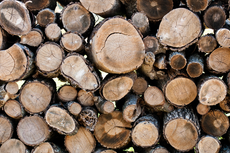 has been: Close-up background of wood that has been chopped into logs