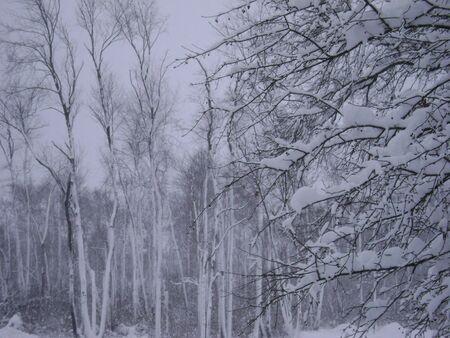 Trees in winter snow Stok Fotoğraf