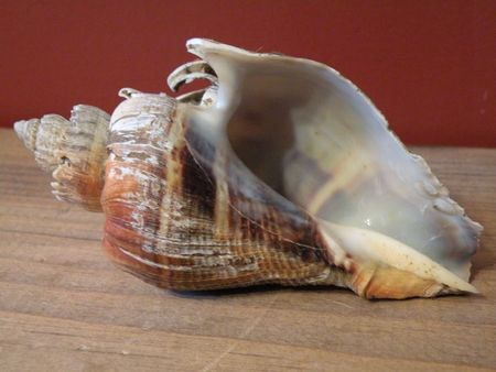 Shell Banco de Imagens