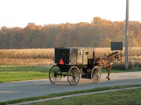Amish Horse & Buggy