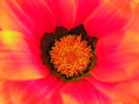 Flower Closeup Banco de Imagens