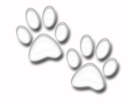 Paw Prints isolated on white Banque d'images