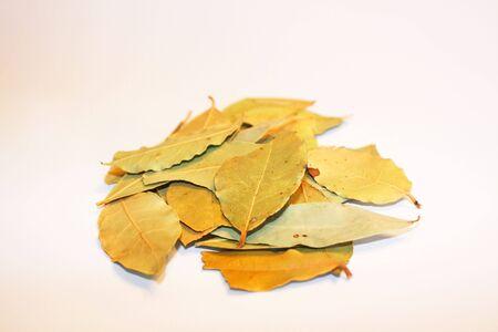 山の月桂樹の葉 写真素材