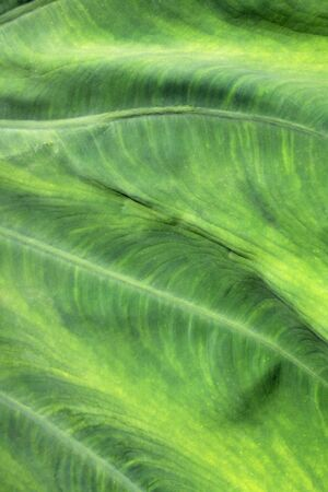 Green leafy texture