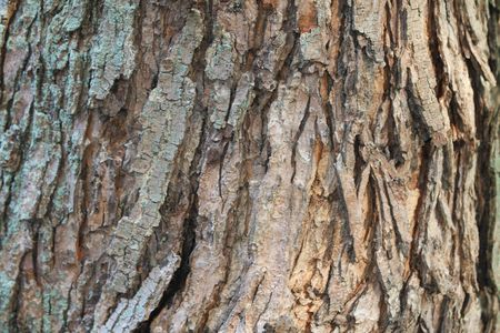 Tree Bark background close up and natural looking