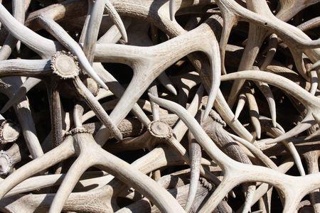 A stack of Elk and Deer Antlers