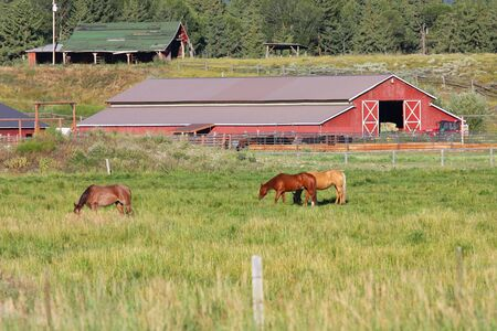 Horses on a ranch with red barn backdrop photo