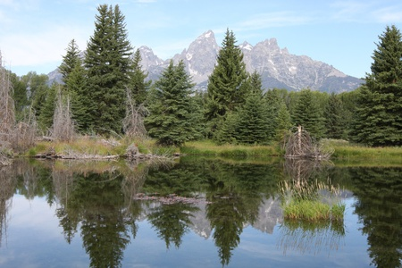 Teton Mountains and pine trees reflecting in water photo