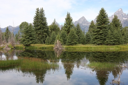 Evergreen Trees Reflecting in a Body of Water Stock Photo - 9093364