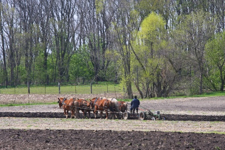 A team of horses and an Amish man plowing fields