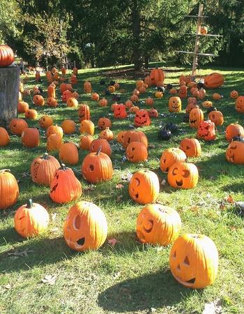 Pumpkin display at Halloween.