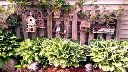 Birdhouses on a vintage picket fence with Hostas.