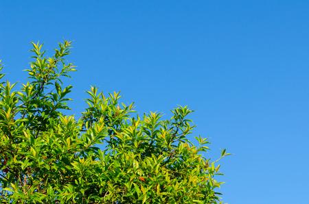 foret sapin: L'arbre de la for�t et de ciel bleu dans la for�t s�che sempervirente � Tak Tha�lande