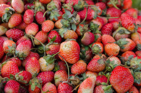 The red strawberry in the local market on roadside of TAK-MEASOD Thailand photo