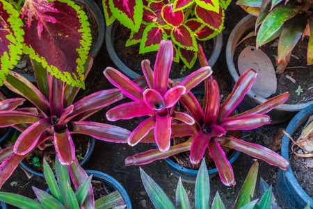 Group of Fresh Ornamental Plant in Garden