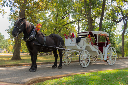 hackney carriage: Horse and Carriage Ride in a forest Stock Photo
