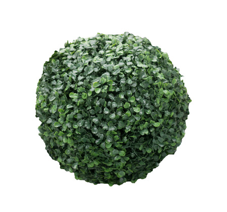 Green bush sphere isolated on white background photo