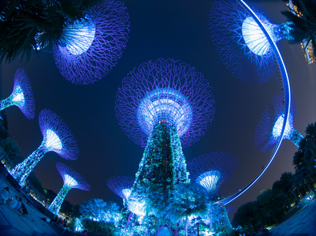 Supertree Grove. Garden by the bay or outdoor artificial trees in Marina Bay area in urban city of Singapore Downtown at night. Landscape background