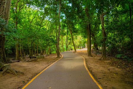 Pathway with green trees tunnel corridor, Kanchanaburi, Thailand. Way through national park garden in summer season. Natural landscape background.