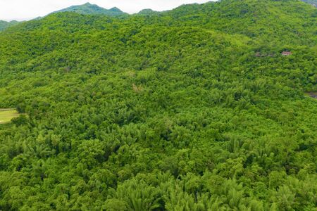 Aerial top view of trees in tropical forest in national park and mountain or hill in summer season in Kanchanaburi district, Thailand. Natural landscape background.