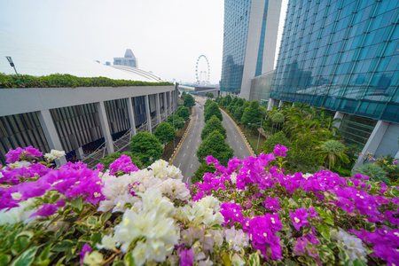 Colorful flowers with Singapore flyer in Downtown Singapore skyline. Financial district and business centers in urban city in Asia. Skyscraper and high-rise buildings.
