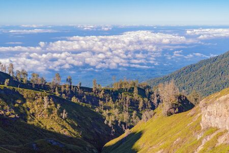 Aerial top view of trees in tropical forest in national park and mountain or hill in summer season in Indonesia at noon. Natural landscape background.